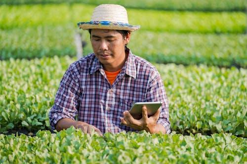 Top 5 Ways to Increase Crop Yields in Drylands.